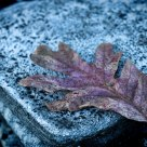 Leaf on Stone